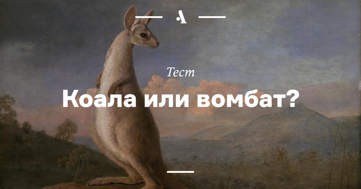 Тест: коала или вомбат?  •  Журнал