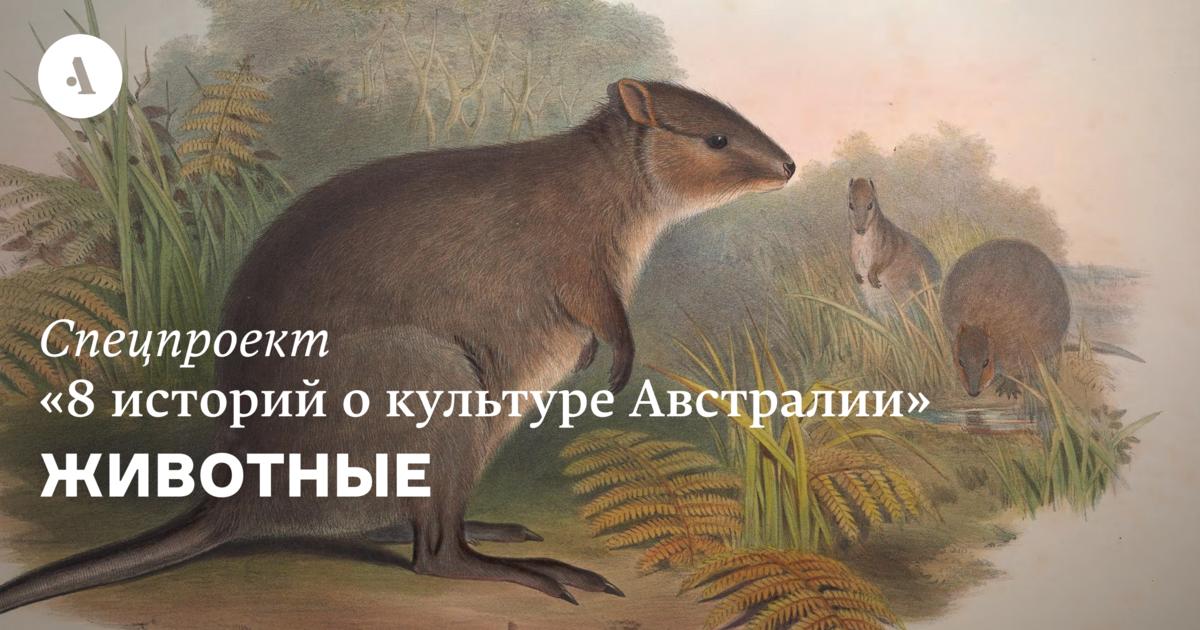 Животные  •  Журнал